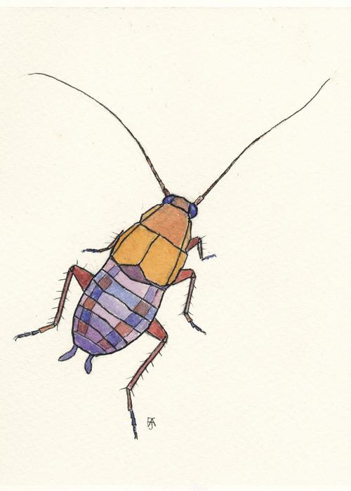 LovelyLessercockroach