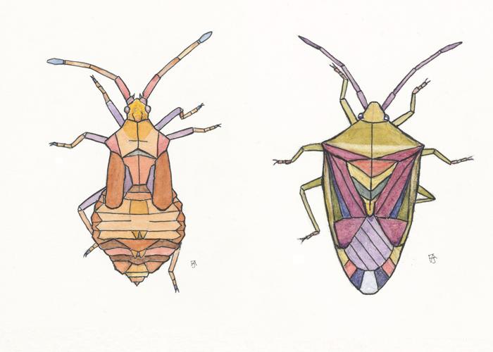 birchdockbug