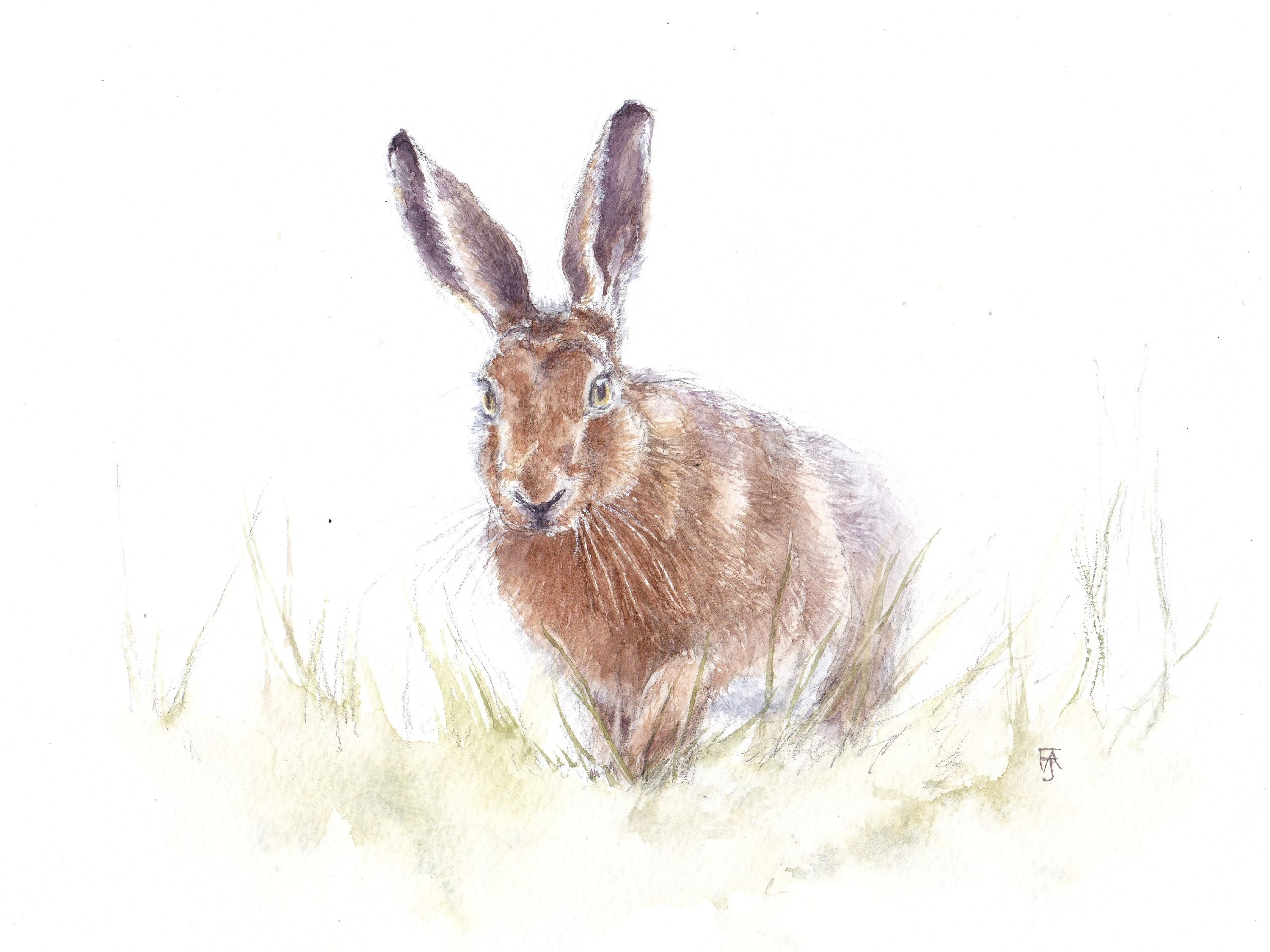 Hare - proceeding with caution copy