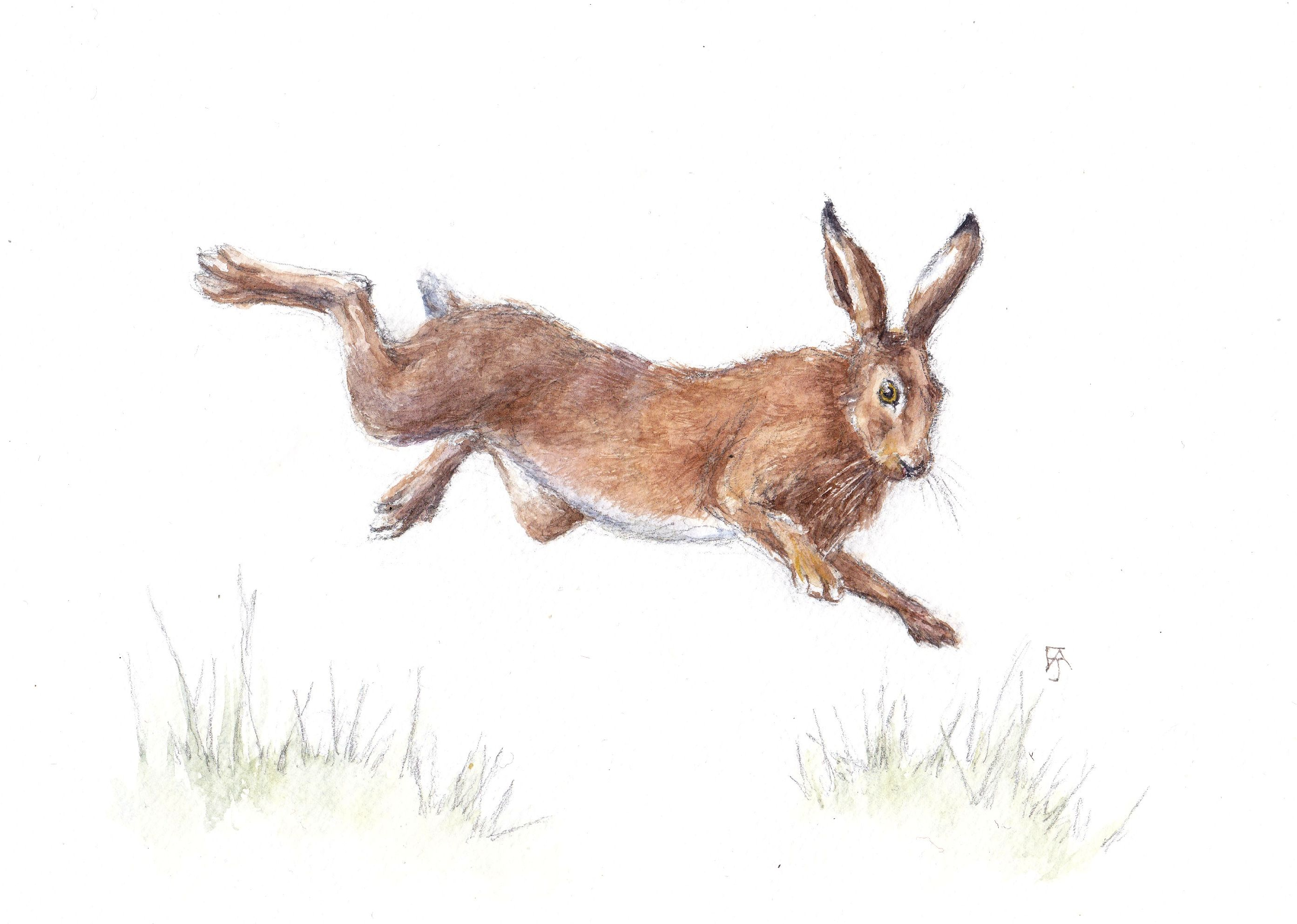 Leaping brown hare F A Jackson
