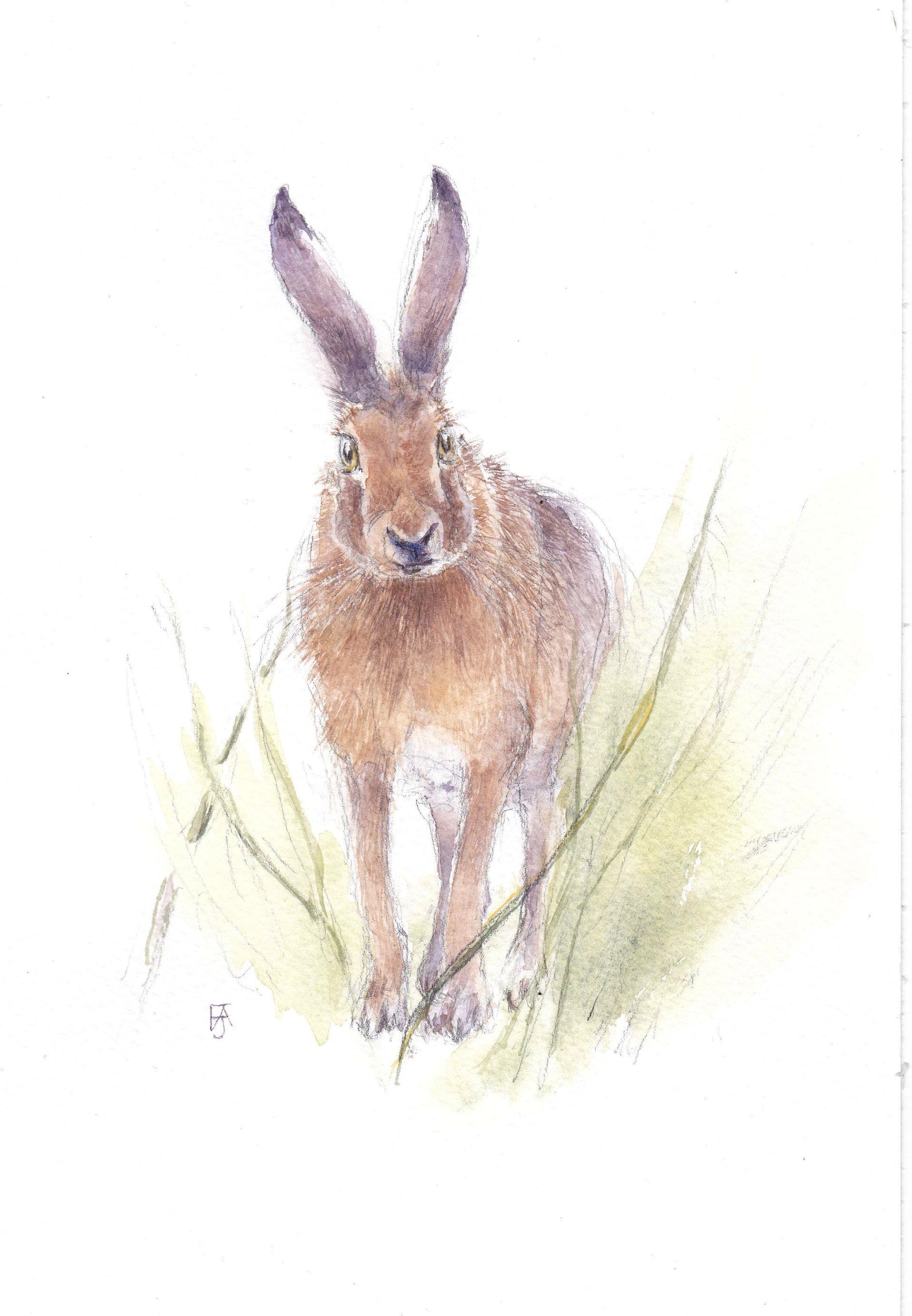 Hare - listening F A Jackson