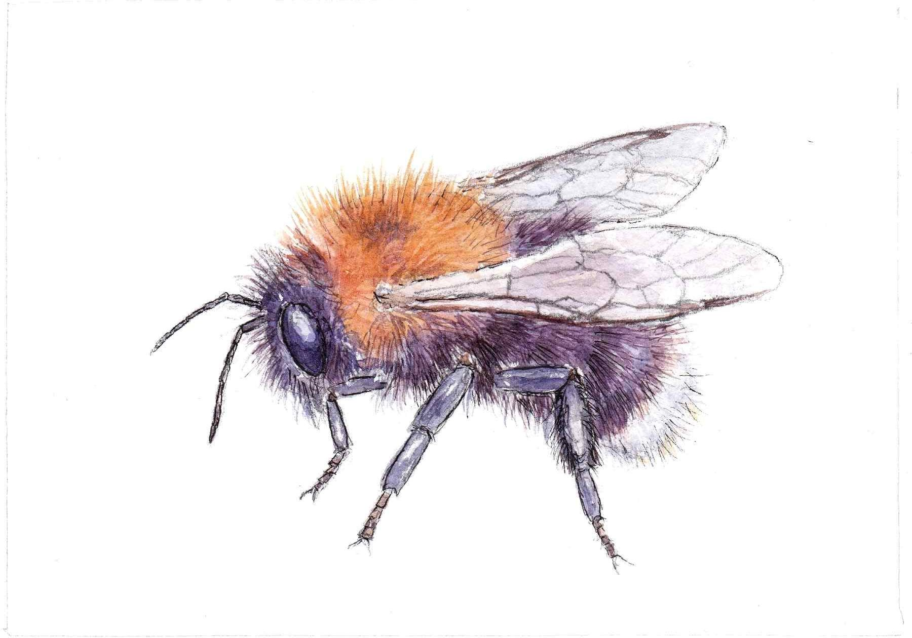 Tree Bee F A Jackson